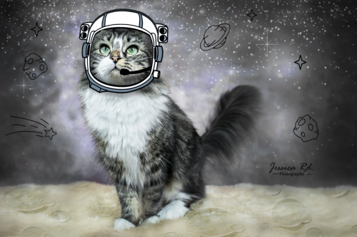 Chat astronaute espace jessica rd photographe animaux