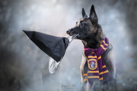 Harry potter chien photographe dunkerque 1