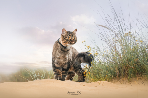 Photographier son chat en exterieur shooting dunkerque animaux 1