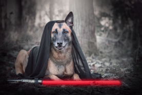 Star wars photos artistique hd photographe animaux dunkerque