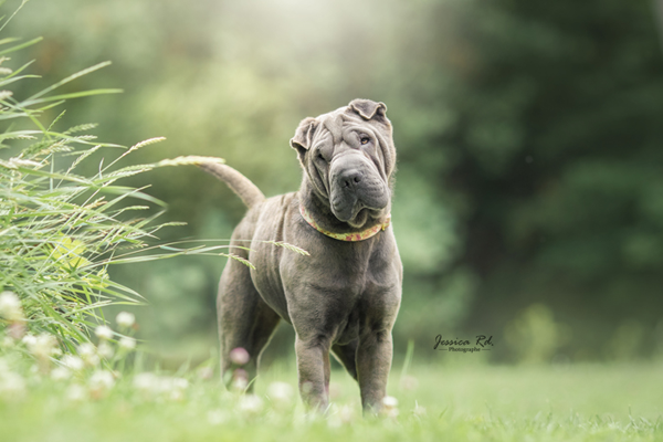 Tarif jessica rd photographe dunkerque animaux chien 1