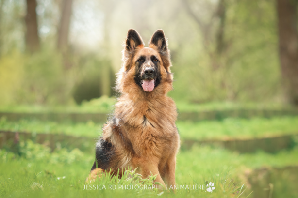 Photographe animaux chien dunkerque 3